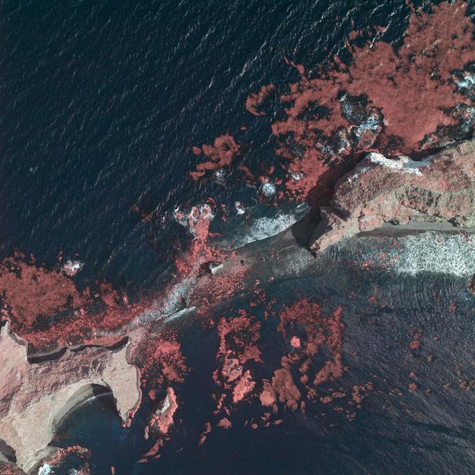 Kelp Beds Anacapa Island
